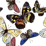 Vector seamless wallpaper pattern with butterflies for design. Butterfly seamless wallpaper pattern with colorful butterflies Royalty Free Stock Photo