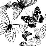 Vector seamless wallpaper pattern with butterflies for design. Butterfly seamless wallpaper pattern with engraved butterflies Royalty Free Stock Photos