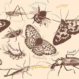 Vector seamless wallpaper pattern with detailed insects in vinta Stock Image