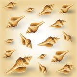 Vector seashell pattern Stock Image