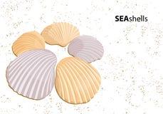 Vector seashells Royalty Free Stock Photos