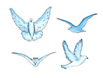 Vector  series of watercolor drawn birds Stock Image