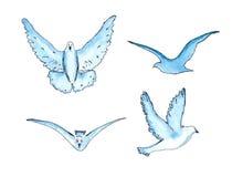 Vector  series of watercolor drawn birds Stock Image