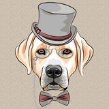 Vector serious cartoon hipster dog Labrador Retriever breed. Serious cartoon hipster dog Labrador Retriever in a gray silk hat, pince-nez and bow tie Stock Photo