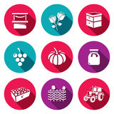 Vector Set of Agriculture Icons. Market, Roses, Beehive, Grapes, Pumpkins, Jam, Fruits, Wicker Fence, Tractor. Stock Image