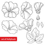 Vector set with Alcea rosea or Hollyhock flower. Bud and leaf in black  on white background. Floral elements in contour style with ornate Hollyhock for summer Royalty Free Stock Photo