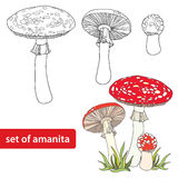Vector set with Amanita or Fly agaric mushroom isolated on white background. Outline poisonous red-cup mushroom in line art decor. Royalty Free Stock Photo