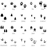 Vector set of 20 animal footprints icon Stock Images