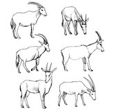 Vector set of antelopes Royalty Free Stock Photography