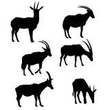 Vector set of antelopes vector illustration