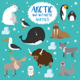 Vector set Arctic and Antarctic animals. Stock Photos