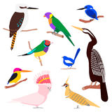 Vector set of australian birds Stock Image