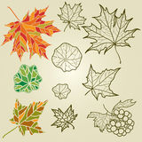 Vector set of autumn leafs Stock Images