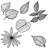 Vector set of autumn leafs Royalty Free Stock Images