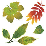 Vector set of autumn leafs Stock Photo