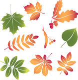 Vector set autumn leaves Royalty Free Stock Photography