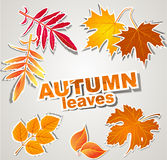 Vector set: autumn leaves Stock Photography