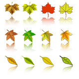 Vector set of autumn leaves Stock Images