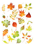 Vector set of autumn leaves. Stock Photo