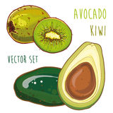 Vector set with avocado and kiwi Stock Images