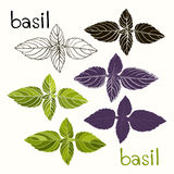 Vector set of basil on a white background Stock Photo