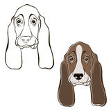 Vector set of  basset hound's face. Hand-drawn  illustrati Royalty Free Stock Image