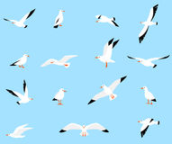 Vector set of beautiful seagulls. Vector set of beautiful seagulls in a flat style isolated on white background. Sea Gull, a beautiful bird. Cute bird in Stock Photo