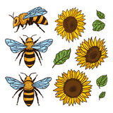 Vector set with bees and sunflowers. Hand drawn illustration.  vector illustration