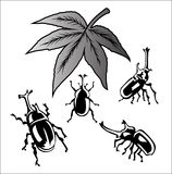 Vector set of beetle on white background Royalty Free Stock Photos