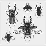 Vector set of beetles. Black and white Royalty Free Stock Image