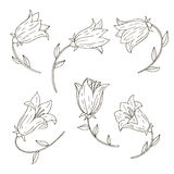 Vector set of bell flowers Stock Photography