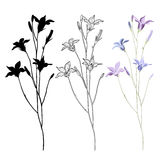 Vector set of bellflower on a white background Stock Photo