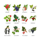 Vector set of berries. Design elements in flat style and icons  on white background Royalty Free Stock Photo