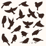 Vector set of bird silhouette. Sitting and flying birds. Set of decorative birds silhouettes. Vector illustration Royalty Free Stock Photos