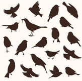 Vector set of bird silhouette. Sitting and flying birds. Set of decorative birds silhouettes. Vector illustration Royalty Free Stock Photo