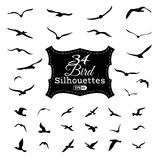 Vector set of bird silhouettes. Royalty Free Stock Images