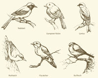 Vector set of birds: Bullfinch, Redstart, Nuthatch, Flycatcher, Royalty Free Stock Photography