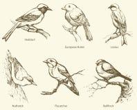 Vector set of birds: Bullfinch, Redstart, Nuthatch, Flycatcher,. Set of birds: Bullfinch, Redstart, Nuthatch, Flycatcher, Lanius, European Robin. Vector Royalty Free Stock Photography