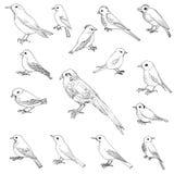Vector set of birds Stock Image
