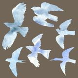 Vector set of birds silhouettes Royalty Free Stock Photos