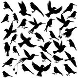 Vector set of birds Royalty Free Stock Photography