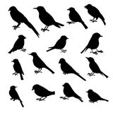 Vector set of birds silhouettes. Hand drawn songbirds, isolated vector elements Stock Image