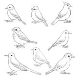 Vector set of birds Royalty Free Stock Image