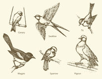 Vector set of birds: Swallow, Sparrow, Magpie, Pigeon, Canary, T Stock Photo