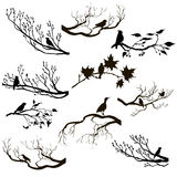 Vector set of birds at tree branches silhouettes Royalty Free Stock Image