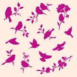 Vector set of birds and twigs Royalty Free Stock Photo