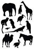 Vector set of black silhouettes of animals Royalty Free Stock Image