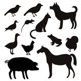 Vector Set of Black Tropical Animals and Birds Silhouettes. Stock Photos