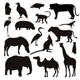 Vector Set of Black Tropical Animals and Birds Silhouettes. Stock Photo