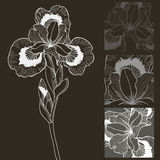 Vector set of black and white iris flower. Decorative elements. Royalty Free Stock Photos